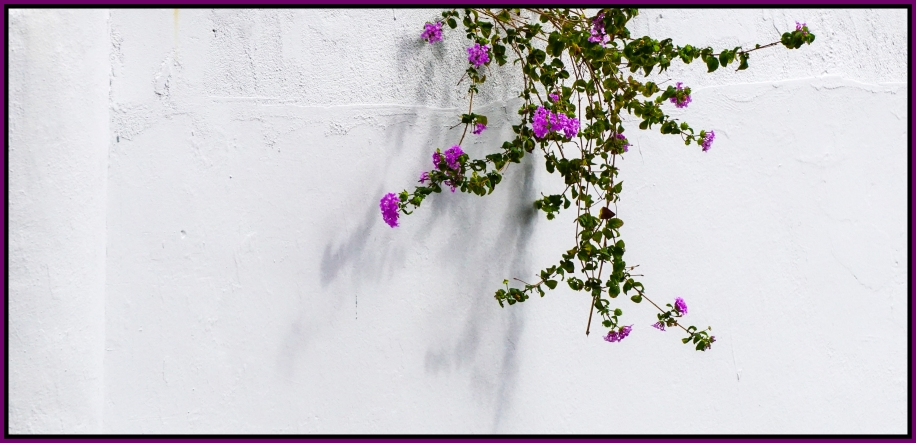 white-wall-25x12